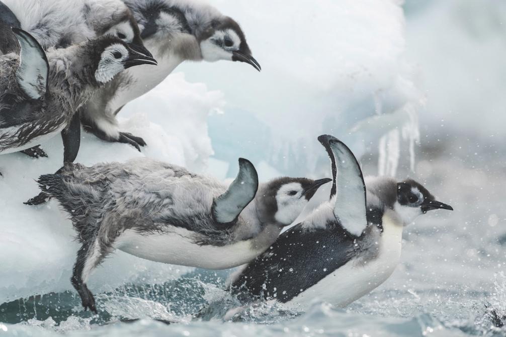Antarctica, sur les traces de l'empereur - Jérôme Bouvier - Francia