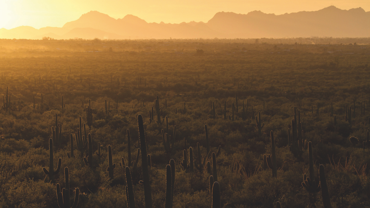 America's National Parks Saguaro - Yann Sochaczewski, Henry M Mix - USA