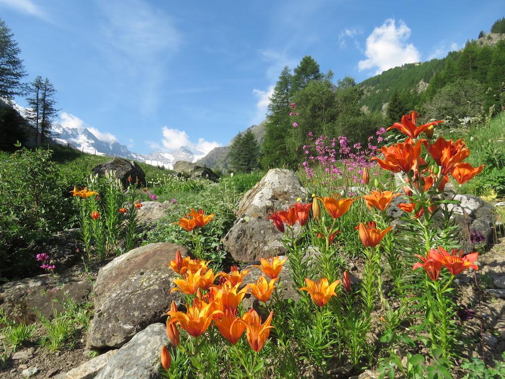 Natura 2017-06-17 Giardino Botanico Alpino Paradisia - Foto Stefania Tron25