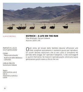 Ostrich - A Life on the Run - Mike Birkhead, Martyn Colbeck - Austria | 2015 | 50'