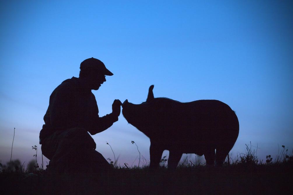 THE LAST PIG (ALLISON ARGO)